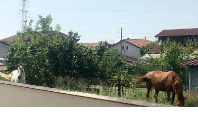 Esterni con cavalli